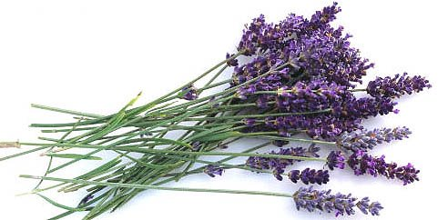 Homemade Lavender Cleaner Recipe