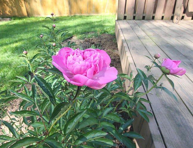 Sunday in the Garden