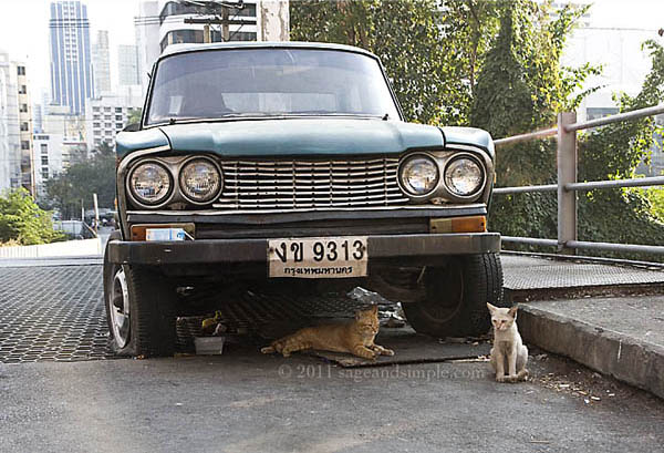Stray Cats Bangkok