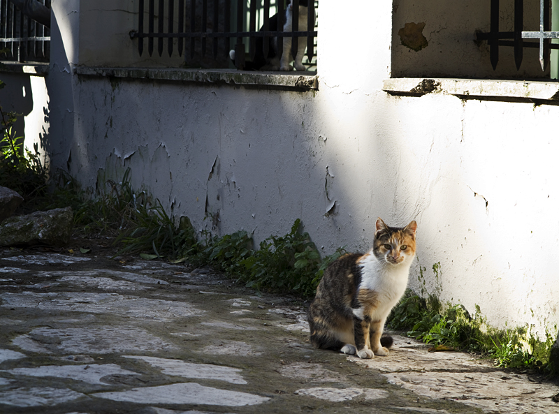 Stray Cats in Athens